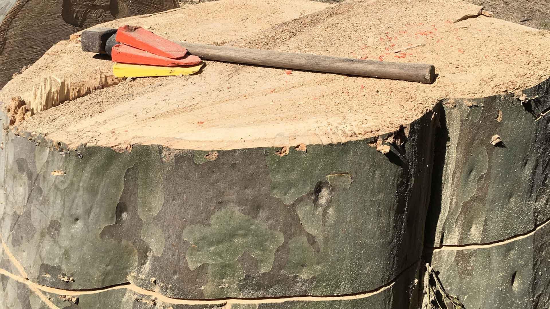 Max Tree Removal Melbourne