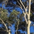 Reasons for hiring professional tree removal services
