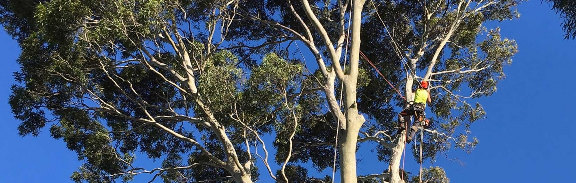Tree Removal – Two Crucial Factors to Keep in Mind